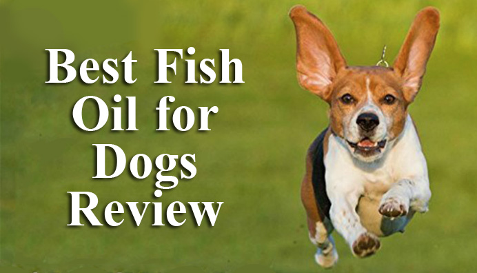best-fish-oil-for-dogs-review