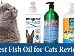 Best Fish Oil for Cats Review