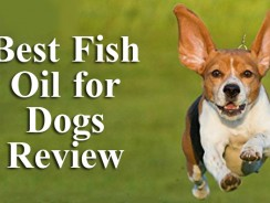 Best Fish Oil for Dogs Review