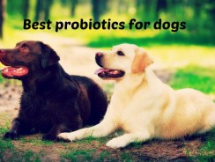 Best Probiotics for Dogs 2016